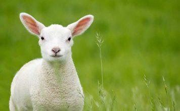 via-agnello