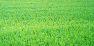 Un grande prato verde