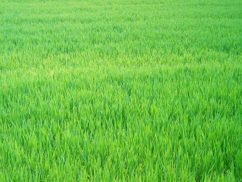 Un grande prato verde milano da vedere for Prato verde