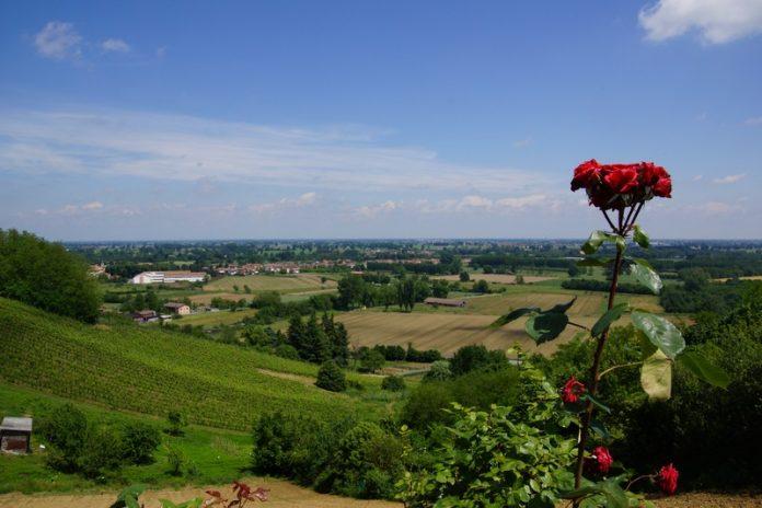 In mezzo alle vigne milanesi