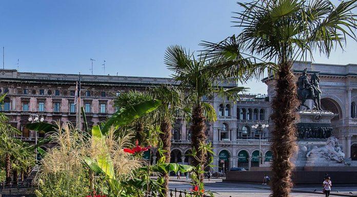 palme in piazza Duomo