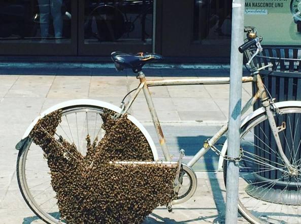 Milano è una città ricca di api