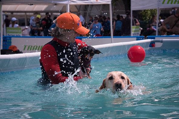 Dog Sport a Quattrozampeinfiera