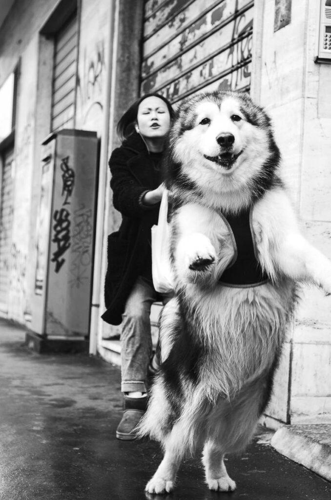 La città dei cani