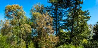 Lombardia seconda regione più green d'italia